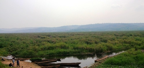 The Akanyaru wetlands remain unprotected ecosystem, where biodiversity is seriously threatened mostly by human activities_Prudence Ndabasanze_2016.jpg