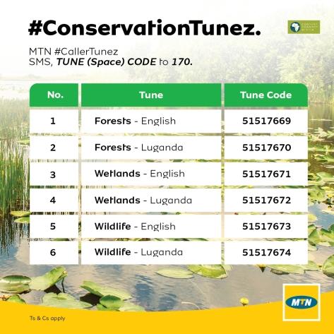ConservationTunez-01.jpg